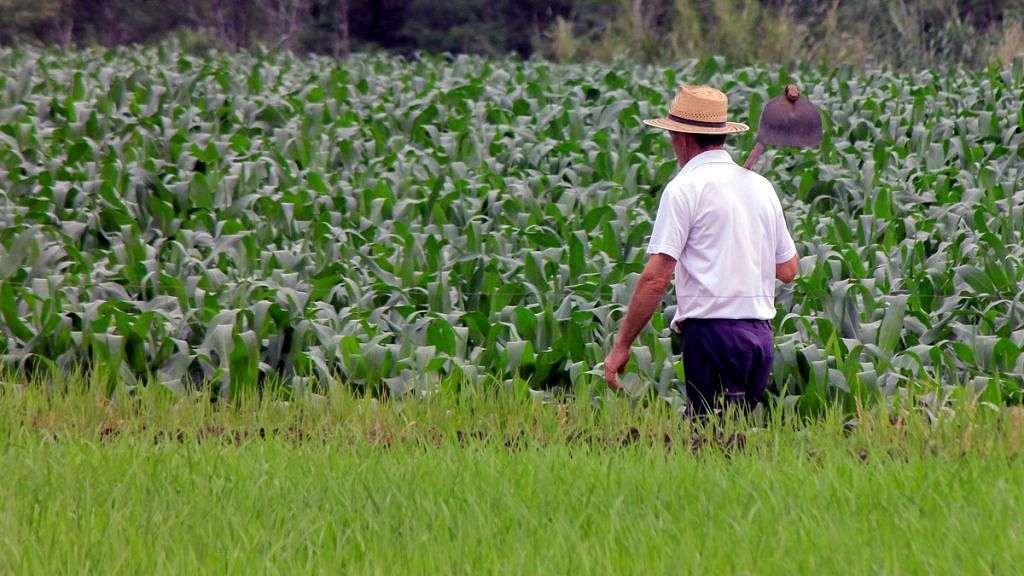 PL dá prioridade da vacinação contra Covid para agricultores