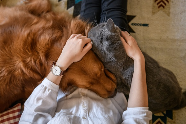 Ales: nova lei que reforça proteção aos animais é publicada no Diário Oficial nesta quarta (30)