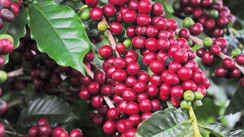 Projeto de Lei propõe criar Fundo Estadual de Café