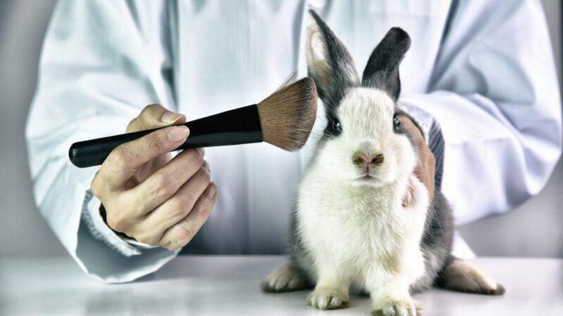 Lei proíbe uso de animais em testes no Espirito Santo